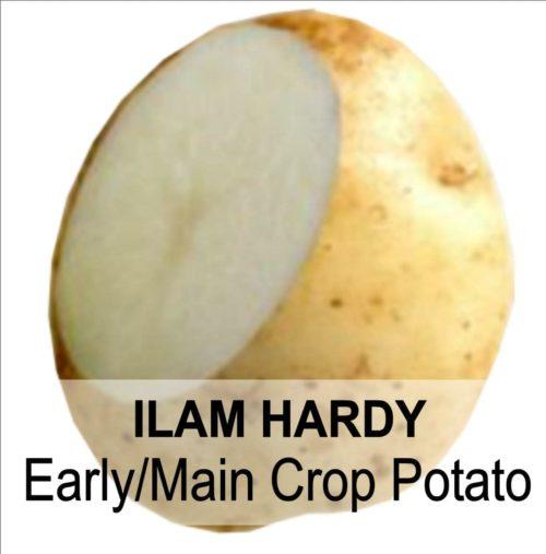 ILAM HARDY