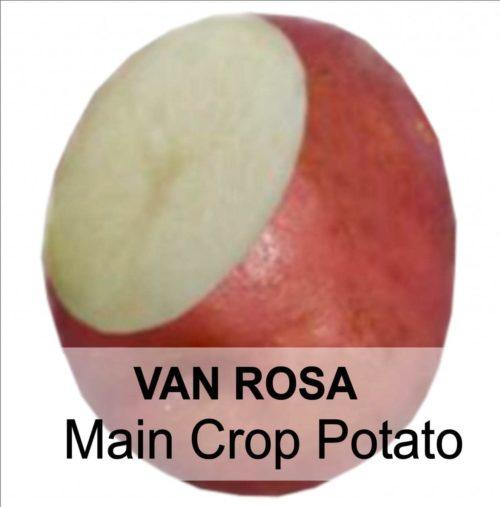 VAN ROSA